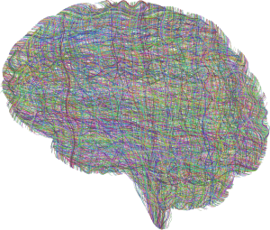 building connections in brain