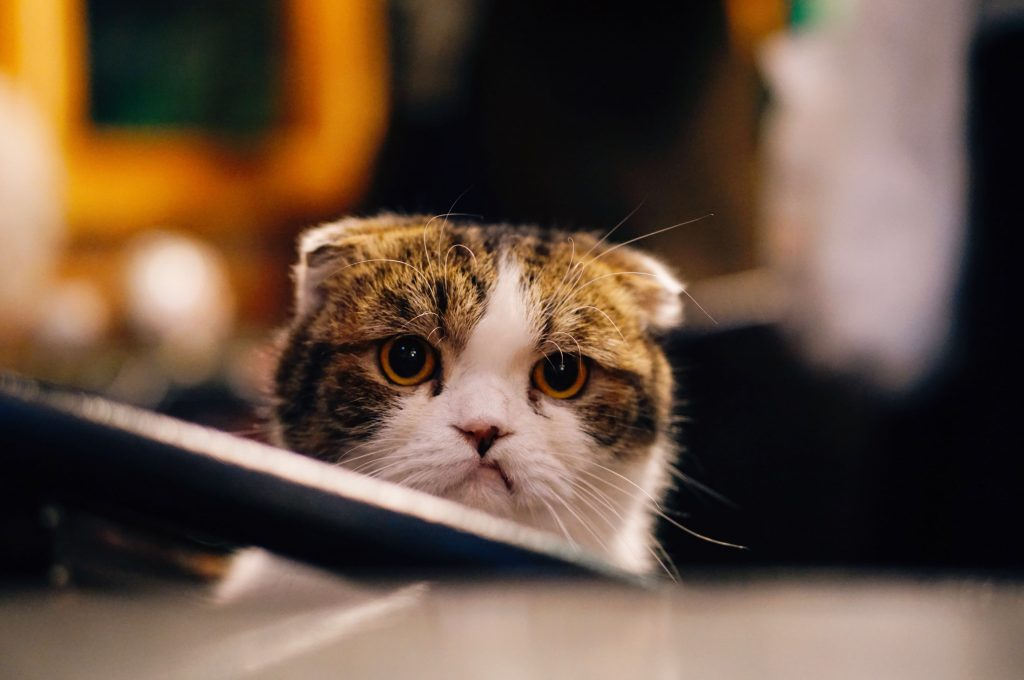 frustrated cat