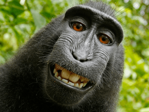 monkey selfie; The Importance of Laughter; laughter is the best medicine; the importance of laughing; laughter is good for the soul #laughteristhebestmedicine